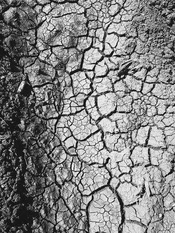 save trees save earth Pattern Land Sand Dry Land Dry EyeEm Selects Save Trees Deforestation Global Warming Global Warming Effect Full Frame Backgrounds Textured  Pattern Cracked Day No People Outdoors Nature Close-up