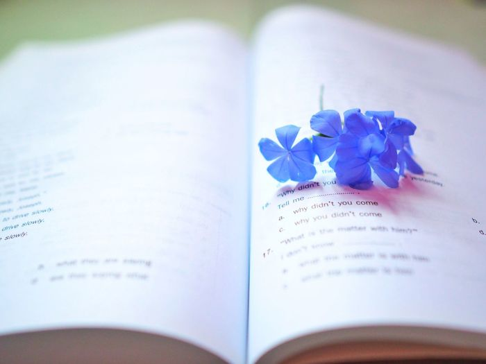 Close-up of blue flower with open book