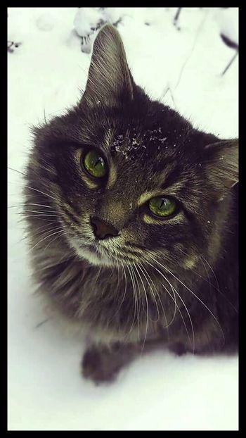 Cat Outdoors Cute Cat 😻 Cute Pets Fliter Winter