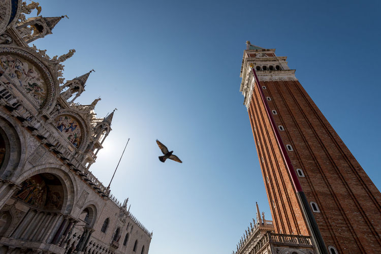 San Marco square in Venice with pigeon, cathedral e bell tower San Marco Square Venice, Italy Basilica Di San Marco Cathedral Of San Marco Pigeon Pigeon In Venice San Marco Bell Tower Tourism