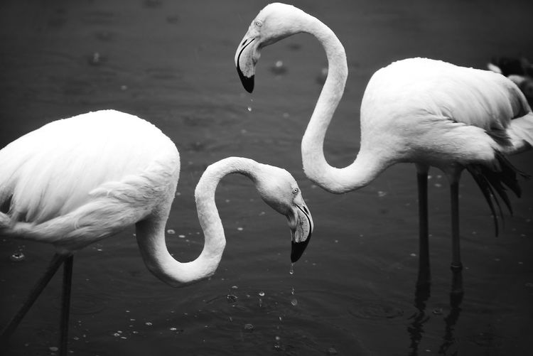 Israel Floyds b&w Monochrome Blackandwhite Black & White EyeEm Best Shots - Black + White Israel Floyd Safari Park Safari Traveling Travelling
