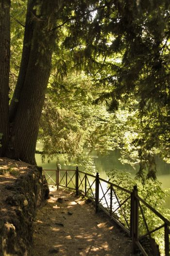 Just folow your path Beauty In Nature Day Forest Growth Lake Landscape Nature No People Outdoors Park Path Pathway Railing Scenics Tranquil Scene Tranquility Tree Tree Trunk
