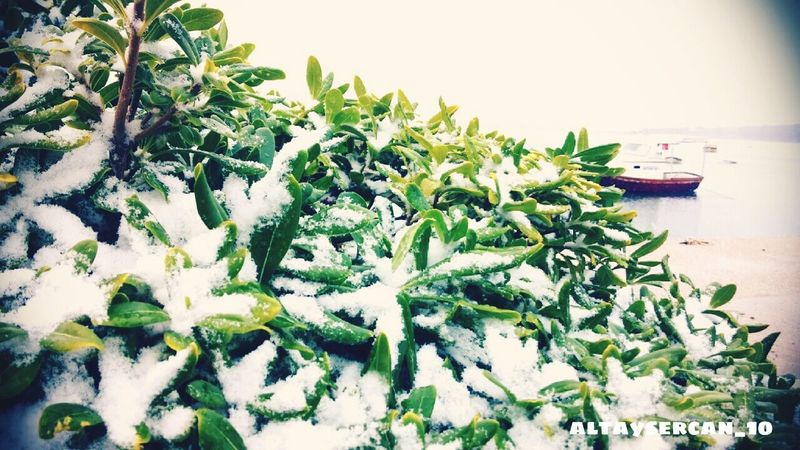 Myfotos Hi! Hello World Taking Photos Enjoying Life Cheese! Enjoying Life Snow Air Flower Ayvalik Objektifim Objektifimden