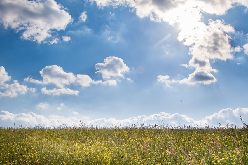 Spring meadow Sunshine Seasons Springtime EyeEm Selects Cloud - Sky Sky Beauty In Nature Field Plant Landscape Flower Flowering Plant Land Tranquil Scene Growth Nature Scenics - Nature No People Day Rural Scene