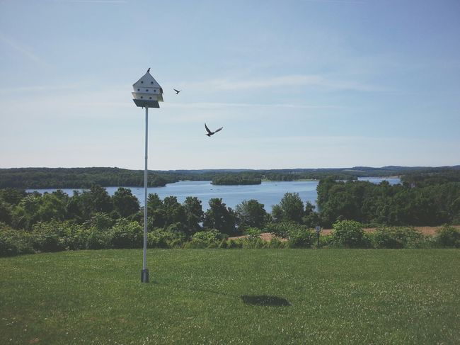 A pair of birds putting on a show at Lake Marburg. Pennsylvania Landscape Vscocam AMPt_community