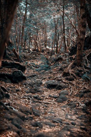 Traveling Japan Spring Forest Wood Jukainomori