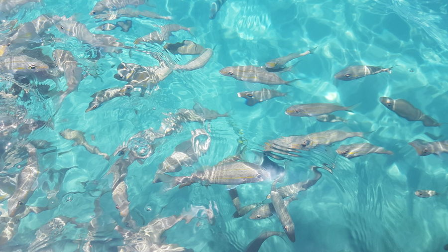 Aerial view of swimming underwater