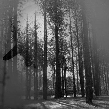 Here's my mash of two awesome pictures by the very talented @keenangrams. Congrats of the 5K. Doubleexposure Keenangrams5k Edits Bnw Forest Silhouette Bnw_society Doubleexposures Portraits DoMore ThisIsSouthAfrica Creative Southafrica Mixup Captures
