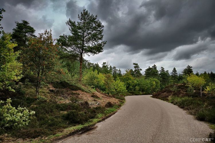 Forest Dark Clouds Denmark Denmark 🇩🇰 Landscape Landscape_Collection EyeEm Nature Lover EyeEm Masterclass Road Cloudporn Tree Storm Cloud Countryside