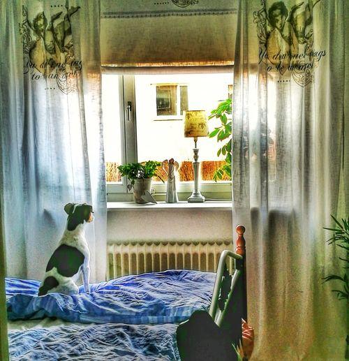 Window Curtain Our Dog Dansk-Svensk Gårdshund Dog❤