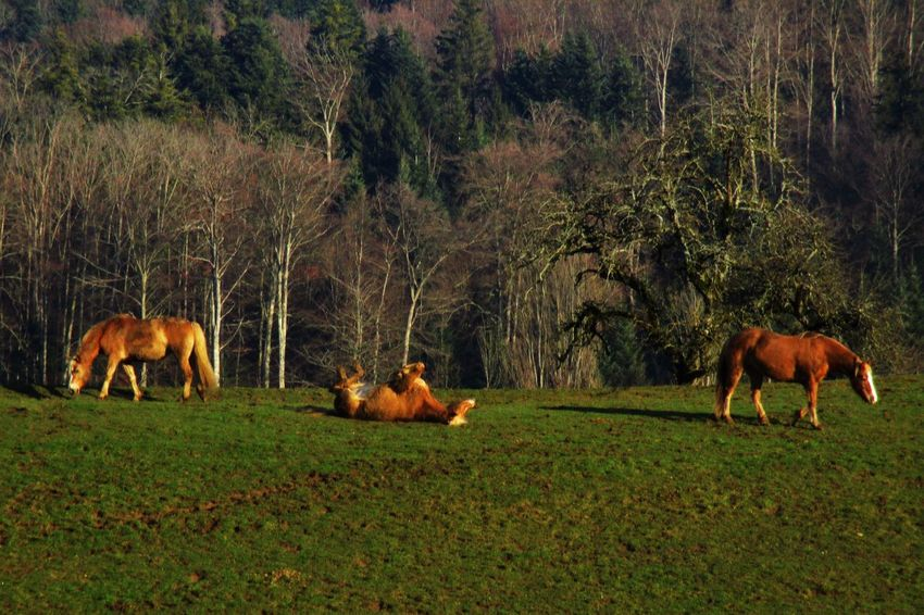 Abundance Animal Themes Arid Climate Brown Day Field Grass Growing Growth Horse Horses Itchy Mammal Nature No People On The Back One Animal Outdoors Showcase: FebruaryRelaxation Relaxing Three Animals Togetherness Two Animals Zoology