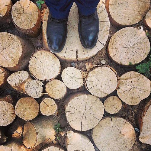 کنده درخت کفپوش