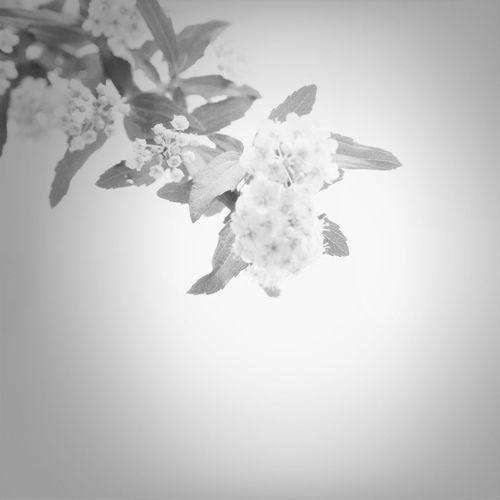 Flowers Blackandwhite