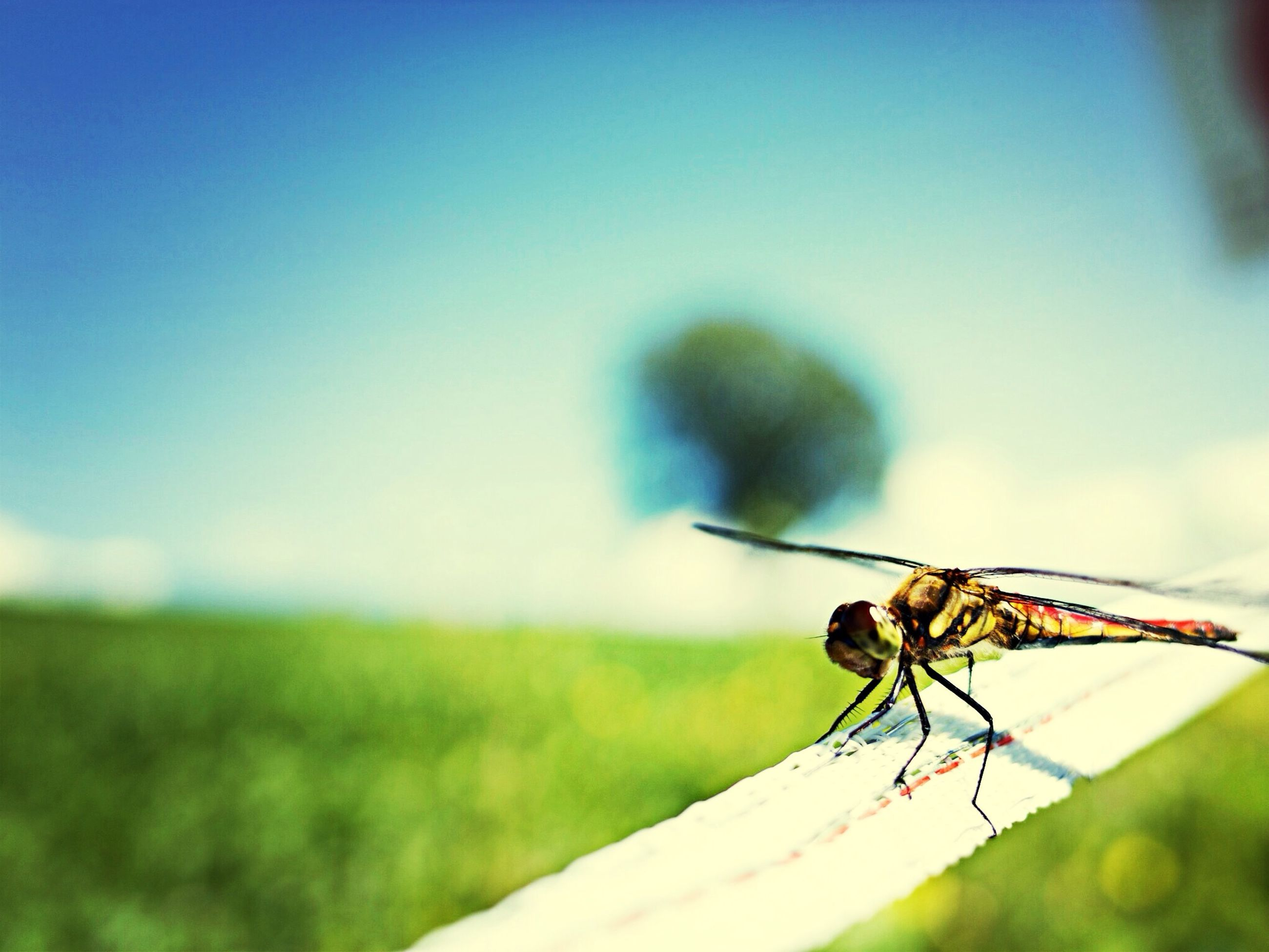animal themes, insect, one animal, animals in the wild, wildlife, focus on foreground, close-up, dragonfly, selective focus, zoology, full length, animal wing, nature, two animals, day, outdoors, spider, animal antenna, no people, perching