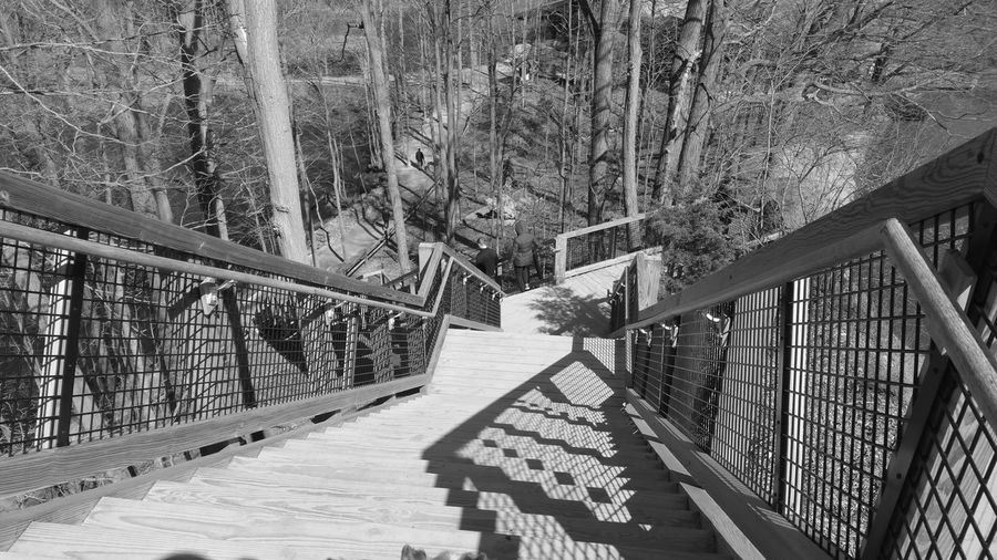 Ohio, USA Cuyahoga County Samsung Black & White Photography CuyahogaCounty Blackandwhite North Olmsted North Olmsted Ohio West Side Stairs Ohio Rocky River Nature Center Mobile Photography Stairs Phone Photography Samsung Note Samsung Note 4 Naural Ohio Tree Footbridge Railing Architecture Built Structure Steps Hand Rail Staircase Stairway