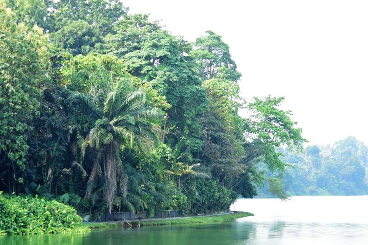 Wildlife and forestry Beauty In Nature Clear Sky Day Forest Green Color Growth Lake Nature No People Outdoors Plant Scenics - Nature Sky Tranquil Scene Tranquility Tree Water Waterfront
