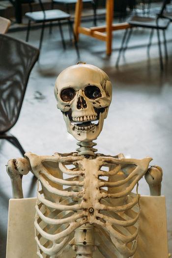 Skeleton 02 on chair Anatomy Dead Decoration Mask Face Thailand Thai person Halloween Human Skull Human Bone Horror Human Skeleton Close-up Skull Skeleton Ghost Bone  The Portraitist - 2018 EyeEm Awards
