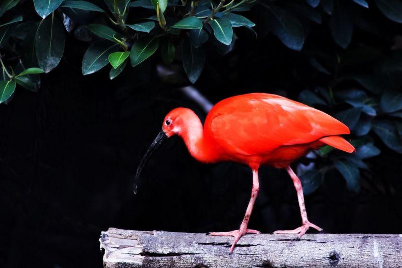 Animal Themes Bird One Animal Nature