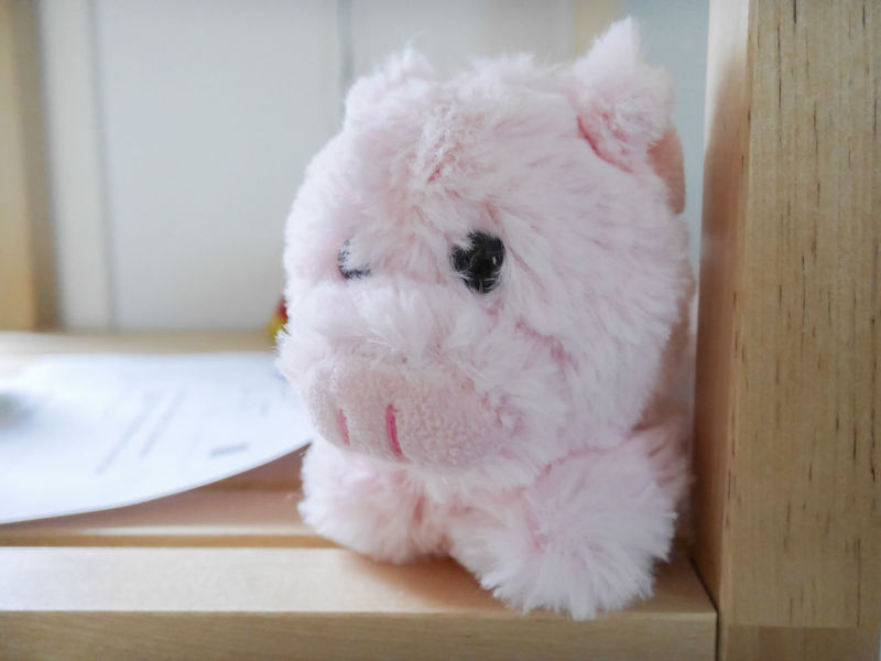 Pink baby pig soft toy Animal Themes Baby Pig Close-up Domestic Animals Indoors  One Animal Pets Pig Pig Toy Piggy Soft Toys Toy Pig