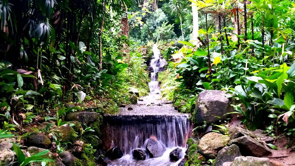 The Botanical Gardens of Rio de Janeiro, Brazil
