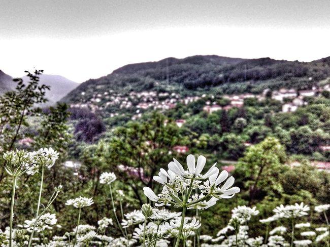 Nature Flower Mountain Drama