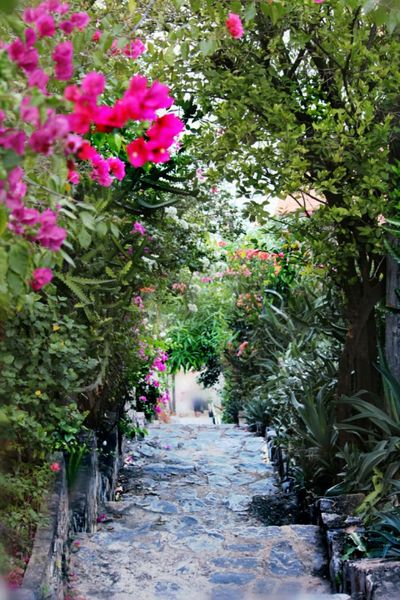 """""""350 Escalones"""" Stairway Flower The Way Forward Color Photography Rhododendron Tranquility Mexico Travel"""