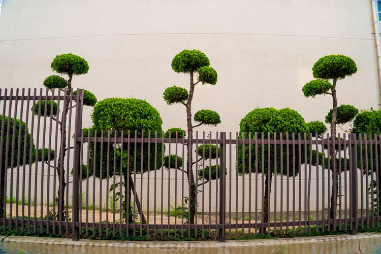 EyeEmNewHere Street Walk Architecture Barrier Boundary Built Structure Bush Day Fence Gate Grass Green Color Growth Hedge Metal Nature No People Outdoors Plant Protection Safety Security Streetphotography Tree Walking Photographer