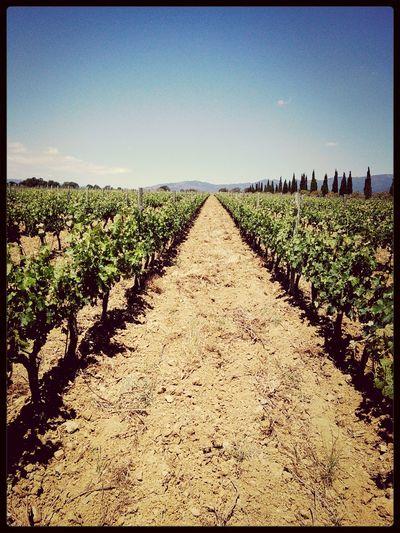 Wine Landscape Sunny Day First Eyeem Photo First Eyeem Photo