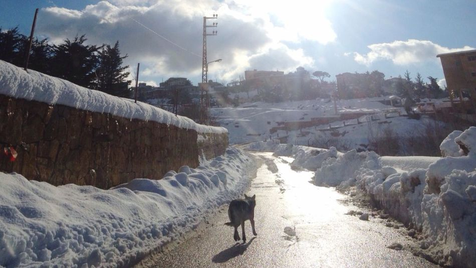 Dog Guide Followme Snow Lebanon LiveLoveLebanon