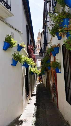 Calle Las Flores Cordoba Spain By Panaka Architecture