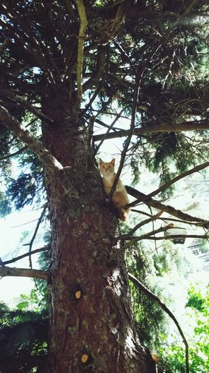 Cat on a tree Tree Cat Noescape Notimetogetdownonearth