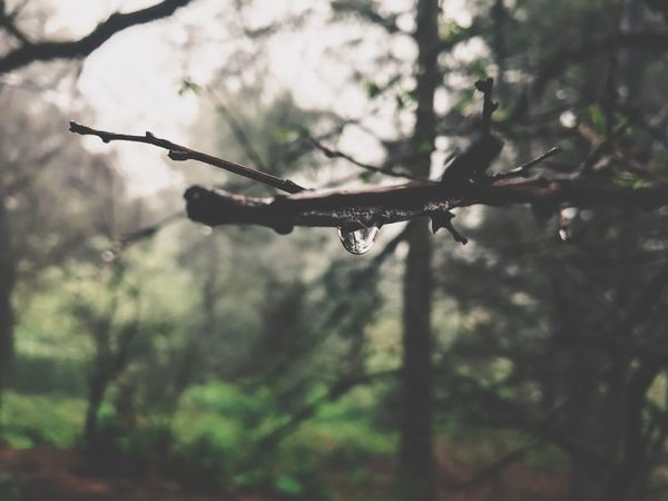 Nature Nature Tree No People Focus On Foreground Close-up Branch Day Outdoors Beauty In Nature Water Sky Tranquility Tranquil Scene RainDrop Cold Temperature EyeEmNewHere Long Goodbye The Secret Spaces EyeEm Diversity Resist