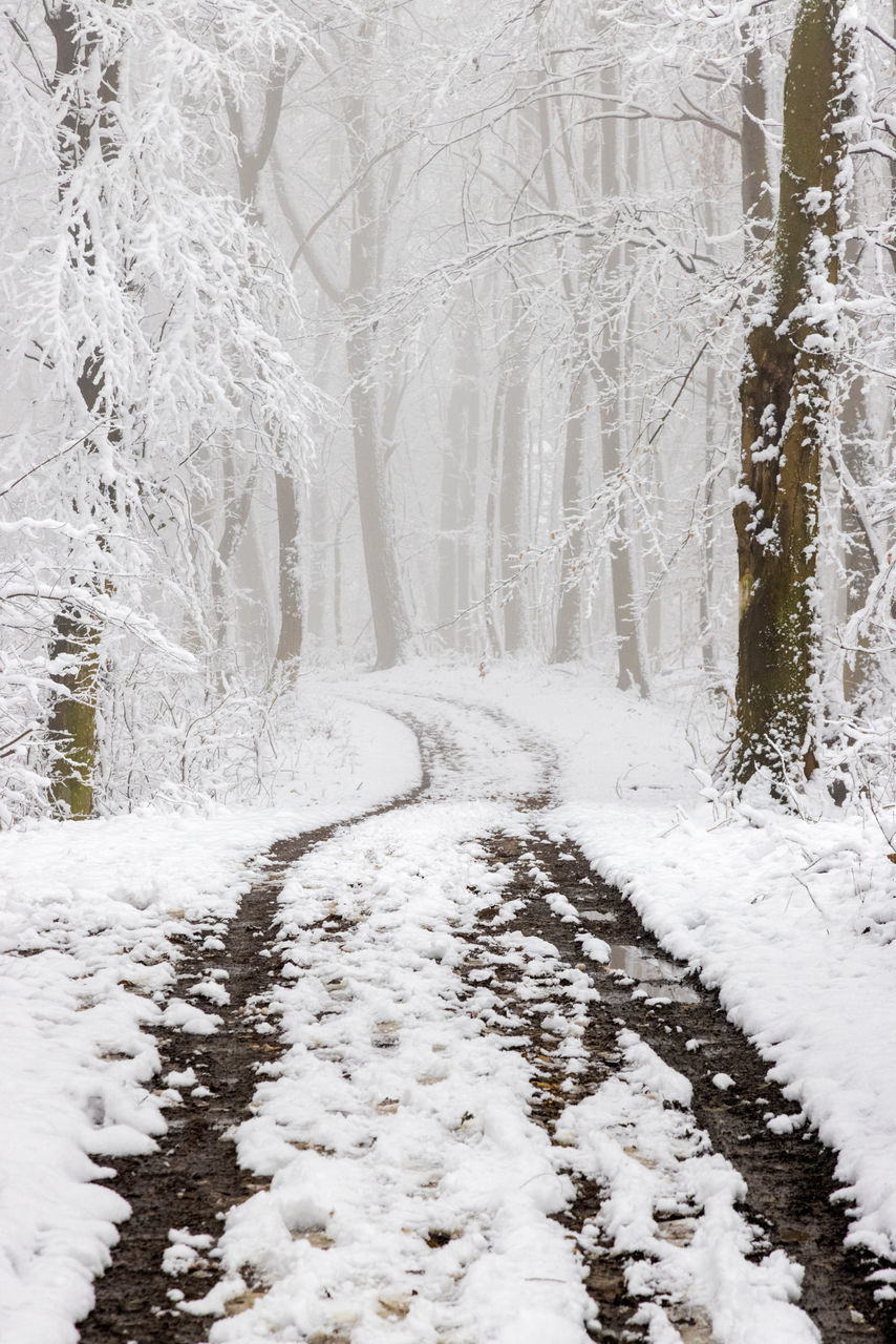 SNOW COVERED ROAD BY TREES IN FOREST