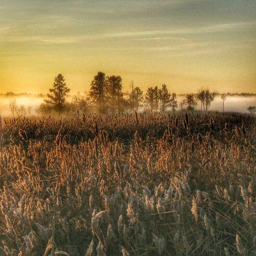 омск сибирь утро туман кэнон хдр Природа паркпобеды осень Omsk Siberia Morning Fog HDR Canon Nature