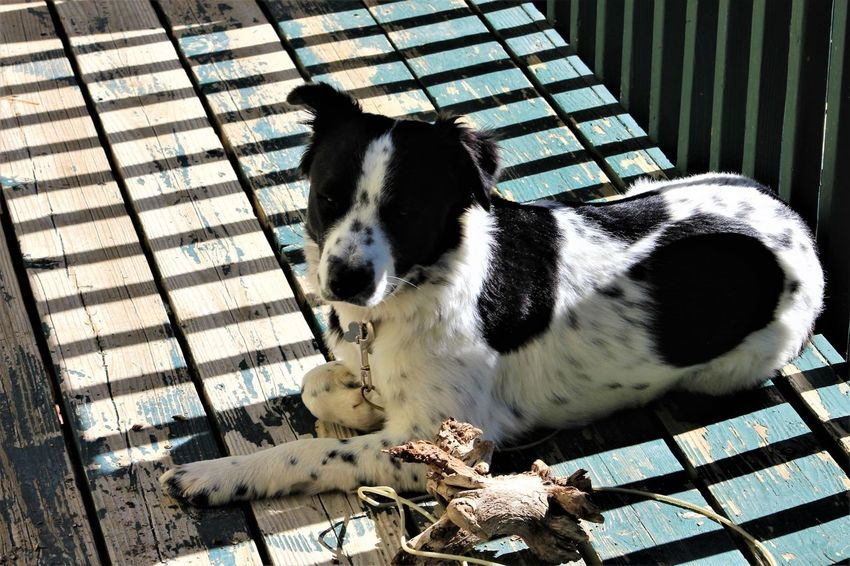 Mammal Animal Themes One Animal Pets Animal Domestic Animals Domestic Vertebrate No People Day Canine High Angle View Sunlight Dog Nature Relaxation Outdoors Seat Wood - Material Close-up Whisker