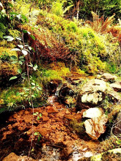 Oase Tree Water