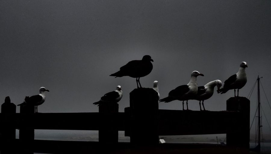 Silhouette birds perching on pole against clear sky