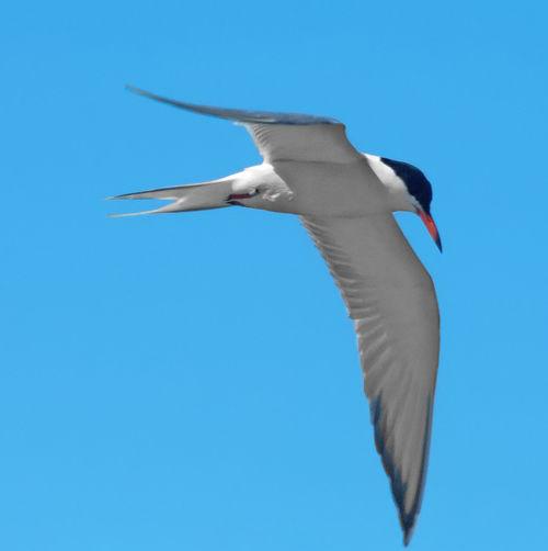 A soaring