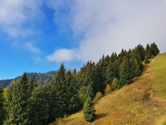 Grass Blue Sky Scenics Tranquil Scene Tranquility Mountain Mountain Range Green Color Nature Beauty In Nature Beauty Forest Tree Rural Scene Sky Cloud - Sky Pine Tree Pinaceae Coniferous Tree Tree Area Calm