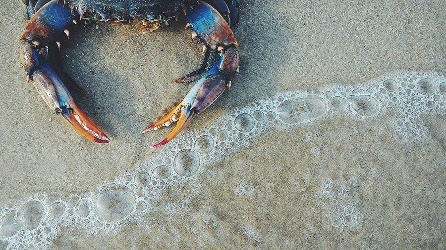 Beach Sand Water Foam Bubbles Animals Crab Beach Photography Seaside Capture The Moment