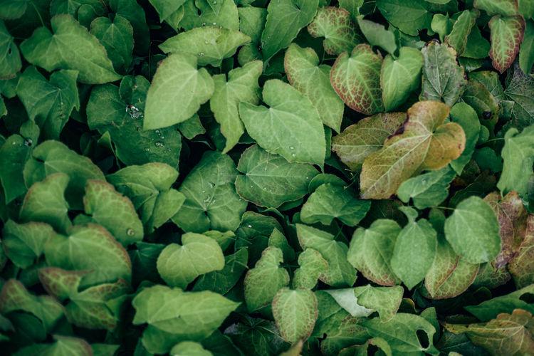 Full frame shot of leaves in water
