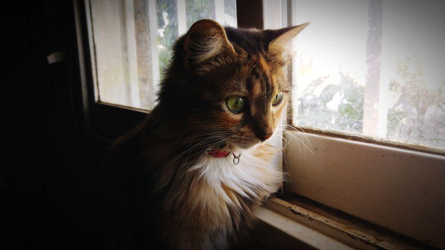 Domestic Cat Animal Themes Hello World Buenos Días Cordoba-argentina Eyemphotography 2016 EyeEm Best Shots Goodmorning EyeEm  Eyem Gallery Gato😽