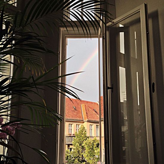 The View From My Window Rainbow