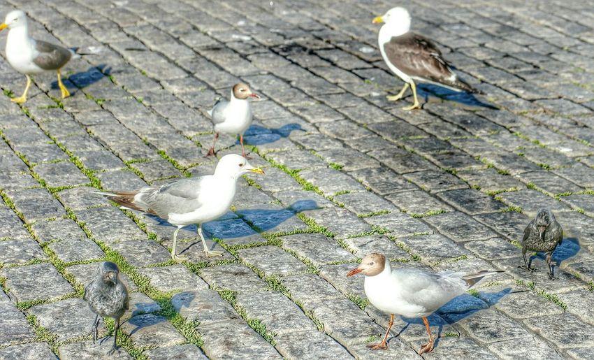 Birds on white surface