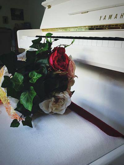 I had a dream Dream Roses Redroses Wish Piano Yamaha Sweet Dead