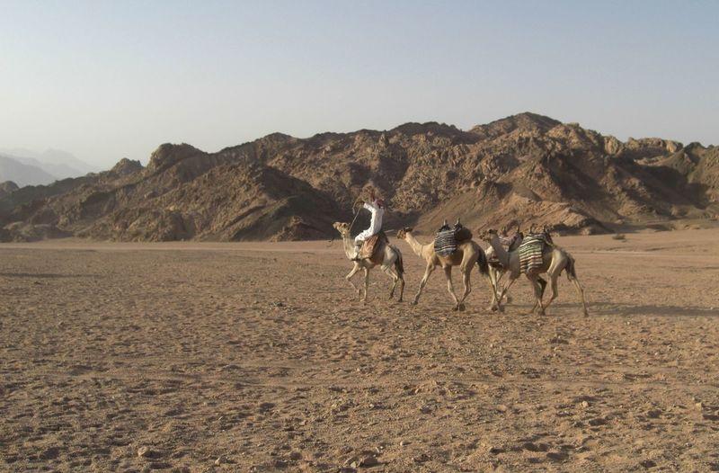 Caravan Making Its Way Through Desert