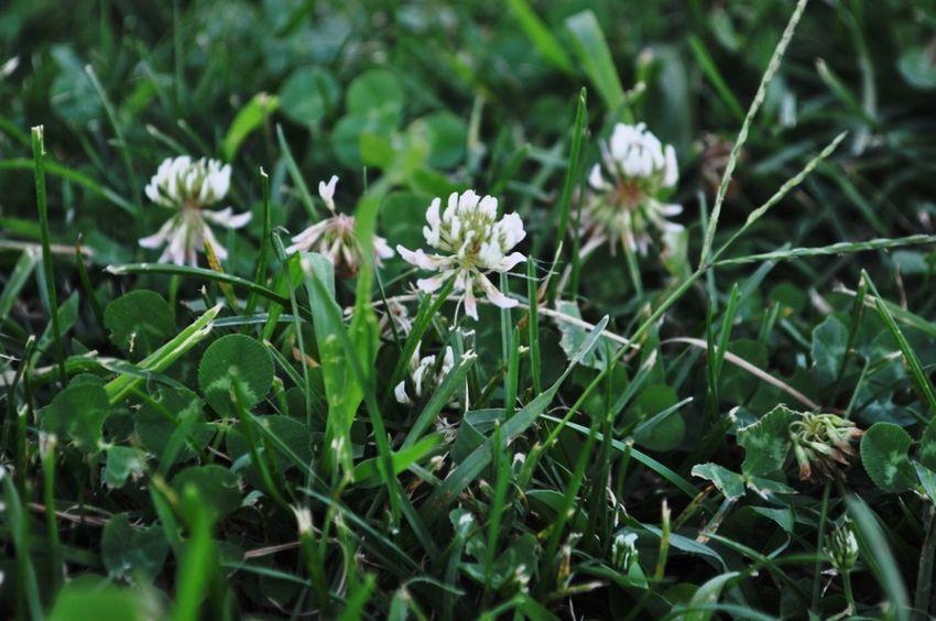 Flower Grasshopper Grassland Green Nature_collection Nature Photography Green Color Green Green Green!  Green Nature Flowers,Plants & Garden Green Grass