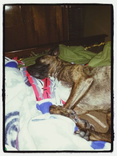 rainy day blanket thief.