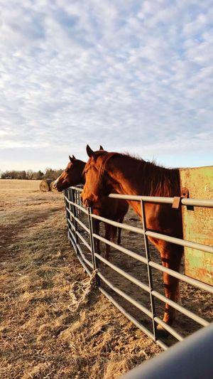 Horse Sky
