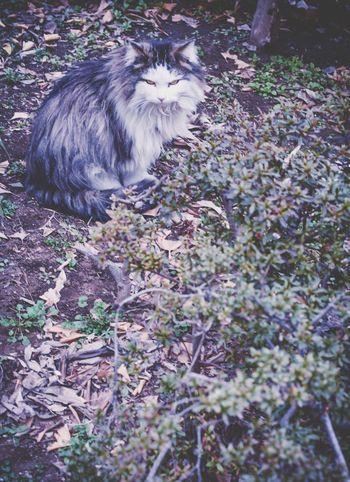 面接 Showcase: February Living Life Japan Snapshots Of Life Cat